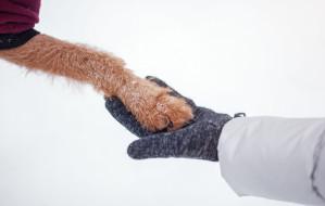 Jak dbać o psie łapy zimą?