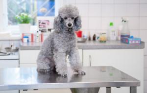 Szczepienia psów: lepiej ich pilnować