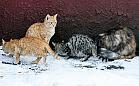 Bezpłatna karma dla bezdomnych kotów z Gdańska