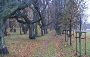 Najpiękniejsze parki w Gdyni