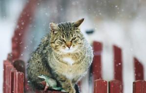 Zimą pomagajmy zwierzętom odpowiedzialnie
