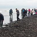 Bursztynowe żniwa na plażach