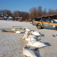 Jak dokarmiać ptaki, by im nie zaszkodzić
