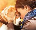 Rozwód a opieka nad psem. Nie taka prosta sprawa