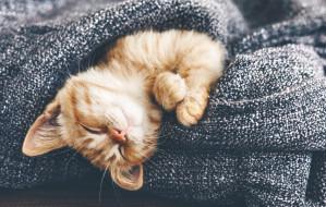 Za co kochamy koty?