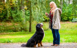 Jak bezpiecznie rozpocząć sport z psem?