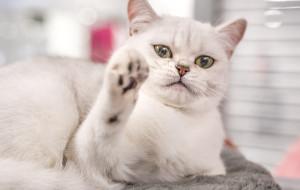 Światowy dzień kota w Galerii Metropolia