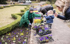 Gdańsk ozdobią tysiące kwiatów