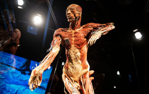 Wystawa Body Worlds już czynna