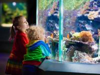 Spacer w zoo, kino czy warsztaty? Planujemy rodzinny weekend