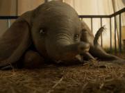 O słoniu, który fruwał wysoko. Recenzja filmu