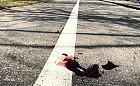 Zawiadomił prokuraturę, że kierowca przejechał psa