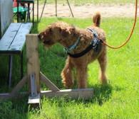 Nosework: wykorzystaj naturalny potencjał swojego psa