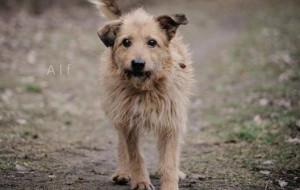 Alf: psi staruszek nie chce umrzeć w schronisku