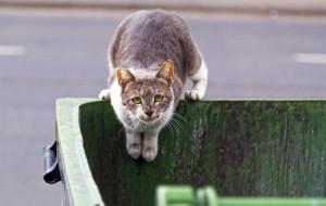 Dokarmianie wolno żyjących kotów latem - czy to ma sens?