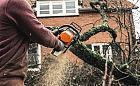 Wycinanie drzew. Kiedy potrzebne jest zezwolenie, a kiedy zgłoszenie?