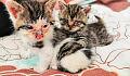 Potrzebne wsparcie dla kotów z Opackiej