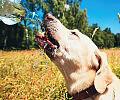 Uwaga upał. Jak pomóc psu w gorące dni?