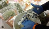 Magazyn narkotyków na terenie ogródków działkowych w Sopocie