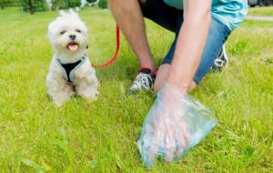 Sprzątanie po psach foliowymi woreczkami - czy to w ogóle ma sens?