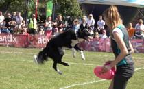 Zobacz jak latają psy na Kolibkach