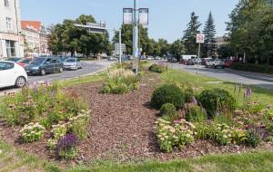 Różne standardy utrzymania zieleni. Soczyście zielone trawniki czy łąki kwietne?