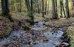 Potok Wiczliński zostanie odtworzony w ciągu 1,5 roku