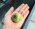 Kamienie, piłki, skarpetki, smoczki. Co weterynarze znajdują w zwierzakach?