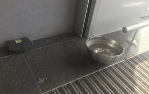 Trutka na gryzonie obok miski z wodą w hipermarkecie