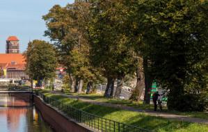 Wiekowe kasztanowce przy kanale Raduni ocaleją