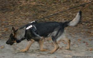 Dzięki policyjnym psom odnaleźli zaginionego