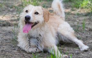 Adopcje zwierzaków: młody Majlo szuka dobrego domu