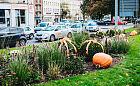 Place i trawniki ozdobione dyniami