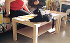 Rodzice małych dzieci w kociej kawiarni. Nie wszyscy szanują regulamin
