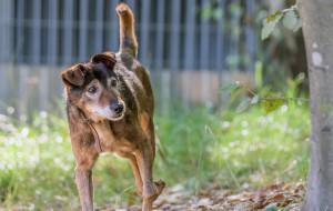 Stasiu - psi staruszek pilnie potrzebuje domu