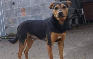 Pies Agat odnaleziony dzięki sile internetu