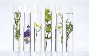 Rumianek, róża, bazylia czy rozmaryn. Moc roślin w kosmetykach
