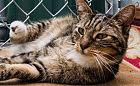 Pusia: kocia dama bardzo stresuje się w schronisku