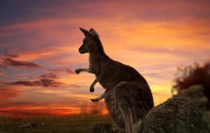 Trójmiejskie firmy pomagają zwierzakom w Australii