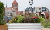 Gdańsk wprowadza zielony Budżet Obywatelski
