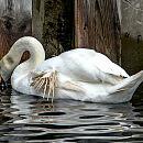 Fatalne skutki dokarmiania ptaków chlebem