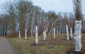 Gdynia: 100 dębów przetrwa budowę węzła Karwiny