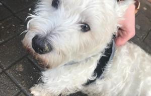 Sopot. Strażnicy pomogli odzyskać skradzionego psa