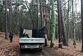 Kot ściągnięty z 30-metrowego drzewa