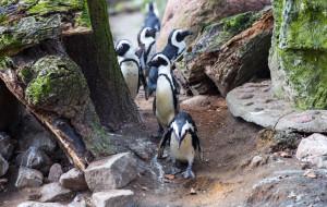 Zoo, teatr czy naukowe warsztaty? Zaplanuj z nami rodzinny weekend