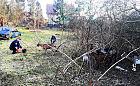 Gdynia-Wiczlino. Kozy odłowione z zaśmieconej działki