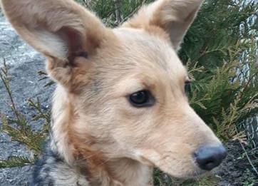 Kolejny porzucony pies. Efekt paniki przed koronawirusem?
