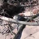 Foka wygrzewała się na plaży w Orłowie