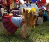 2,5 tys. psów na hipodromie