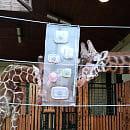 Nowa zabawka dla żyraf z gdańskiego zoo